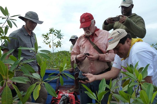 Coring for peat in an Honduran wetland (Photo: Jan Peters)